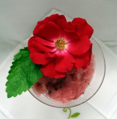 Watermelon and White Nectarine Sherbet with Rose Petals and Champagne